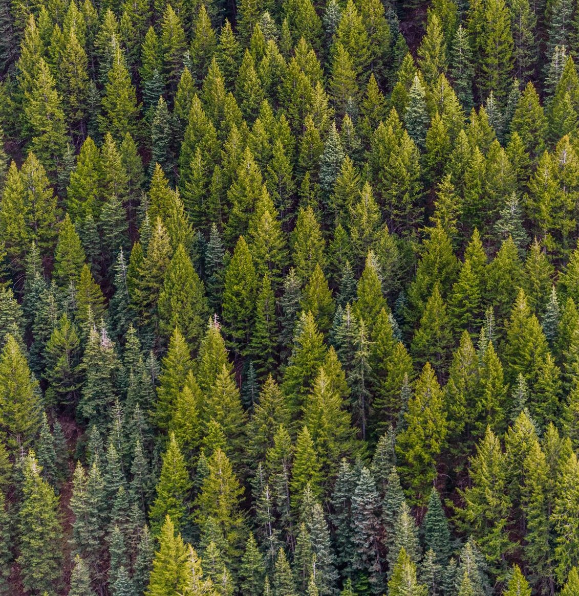 Regency's commitment to the environment reduces forest damage.